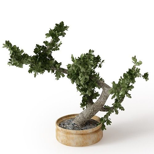 tiny tree in a pot 3d model obj mtl 1
