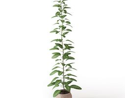 Indoor Potted Plant 3D model