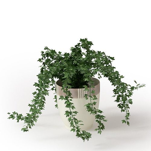 potted house plant 3d model obj mtl 1