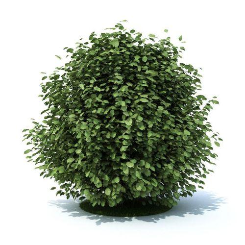 Green Leaf Shrub3D model