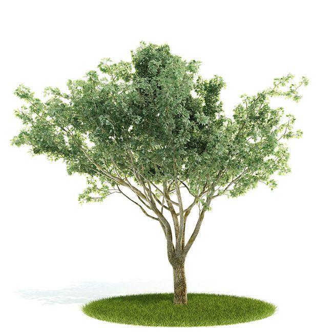 3д Модель Дерева Fbx