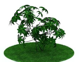 plant 3D Green Leafy Plant