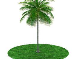 3d green palm tree