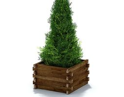evergreen shrub in weathered lumber planter 3d