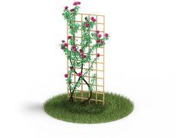 3d garden climbing rose