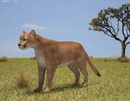 Cougar Puma Concolor 3D Model