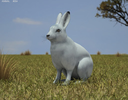 Arctic Hare Lepus Arcticus 3D asset