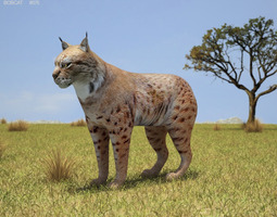bobcat lynx rufus low-poly 3d model