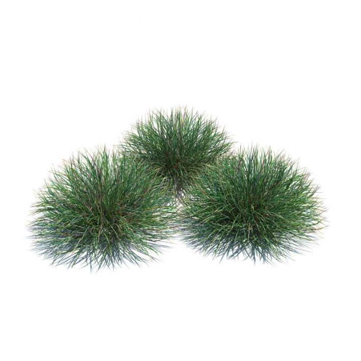 Ornamental Festuca Grass Plant 3D Model CGTradercom : ornamentalfestucagrassplant3dmodel28c4e82d b3a2 45e8 933f b9bc0df47740 from cgtrader.com size 710 x 710 jpeg 44kB