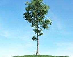 Green Tall Tree 3D model