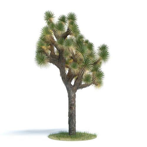 Green Exotic Tree3D model