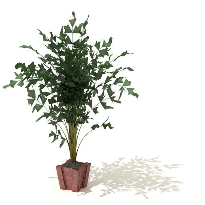 Green Leaf Plant In Red Flower Pot 3d Model