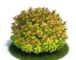 3d mature spirea shrub