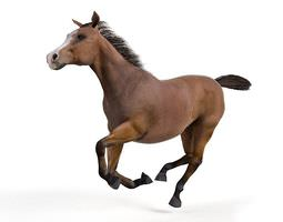 brown galloping horse 3d