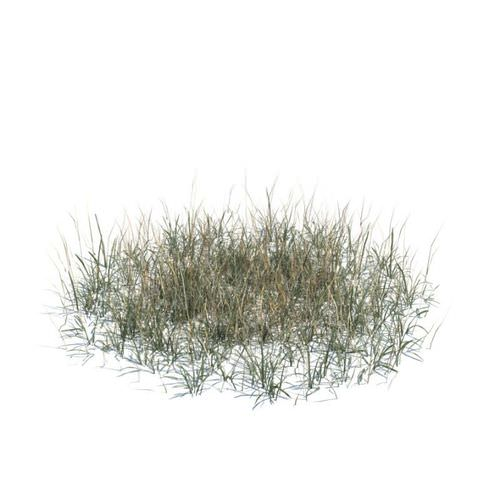 Long Dry Grass 3d Model Cgtrader Com