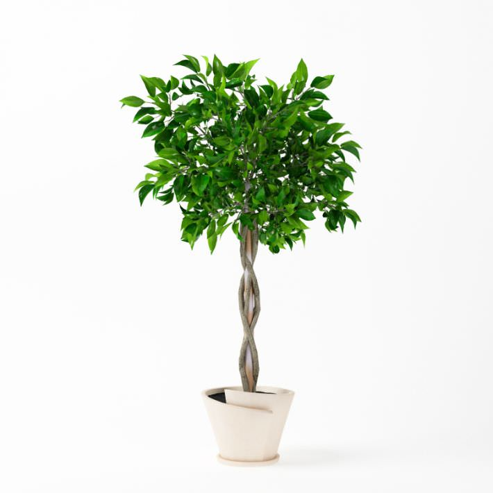 Potted Patio Plant With Braided Tree Trunk 3d Model