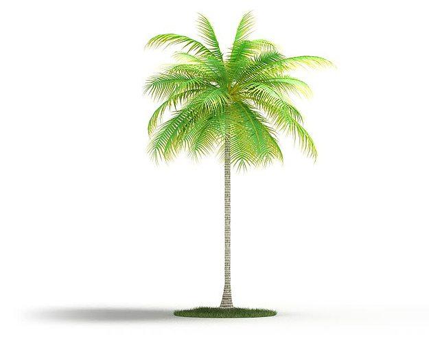 palm tall tree 3d model obj mtl 1