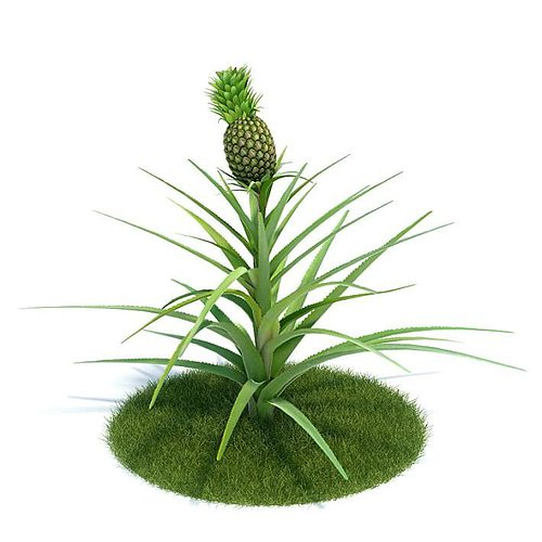 3d model green ananas comosus plant cgtrader. Black Bedroom Furniture Sets. Home Design Ideas