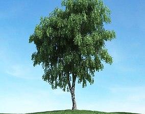 3D Big Leaf Tree