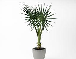 star leaf potted fern 3d model obj