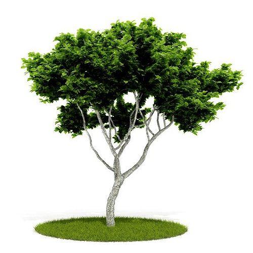 green leaf tree 3d model obj mtl 1