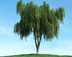 Green Weeping Willow Tree 3D model