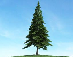 lone tree upon a grassy knoll 3d