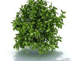 green leafy potted shrub 3d model