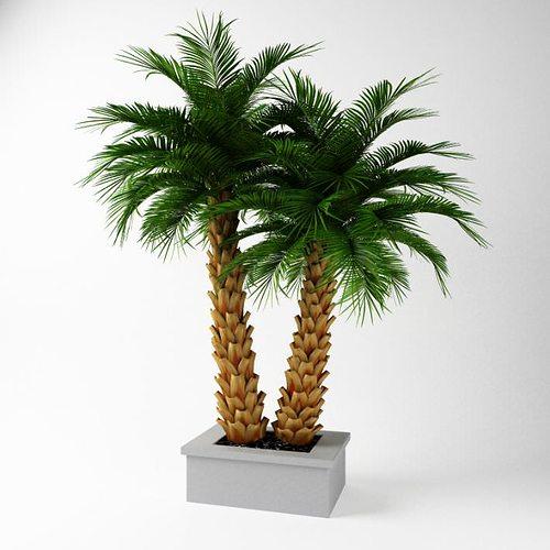 exotic potted tree 3d model obj mtl 1