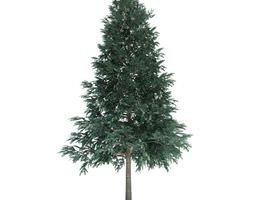 3d model evergreen conifer tree