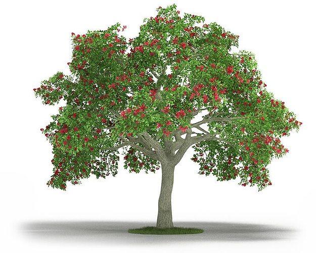 green leafy erythrina 3d model obj 1