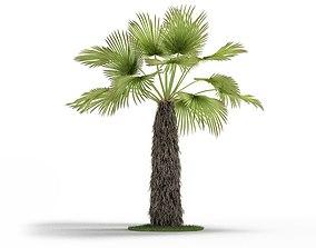 Green Trachycaprus Tree 3D