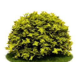 light green leaf shrub 3d