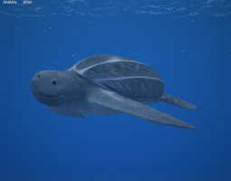 leatherback sea turtle dermochelys coriacea 3d model low-poly