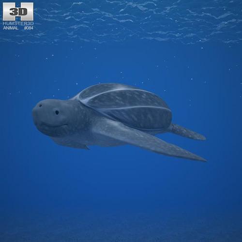Leatherback Sea Turtle Dermochelys Coriacea3D model