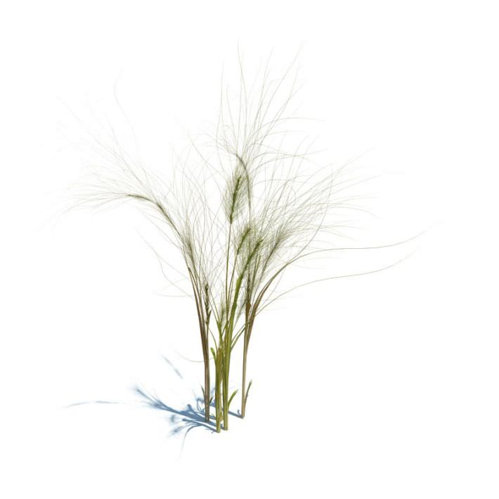 3d model wheat plant cgtrader