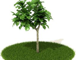 Green Tree With Lawn 3D model