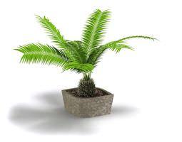 green small fern in grey pot 3d model obj