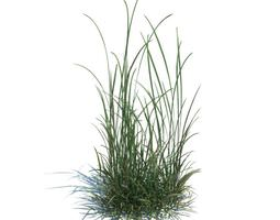 3D Grass Green Weeds