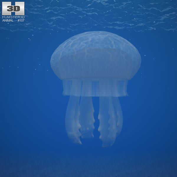 how to make a jellyfish model