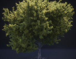 3D French Pine Tree Model