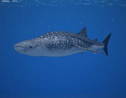 Whale Shark Rhincodon Typus 3D asset