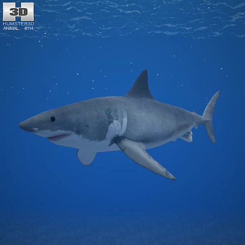 great white shark carcharodon carcharias 3d model low-poly max obj mtl 3ds fbx c4d lwo lw lws 1