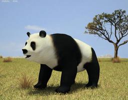 giant panda ailuropoda melanoleuca VR / AR ready 3d model