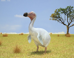 3D asset Dodo Raphus Cucullatus