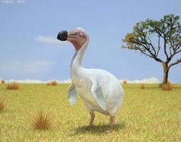 Dodo Raphus Cucullatus 3D Model