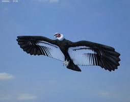 Andean Condor Vultur Gryphus 3D Model