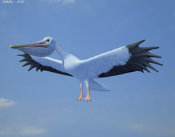 American White Pelican Pelecanus Erythrorhynchos 3D Model