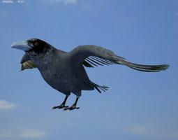 Common Raven Corvus Corax 3D Model