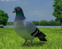 Grid_rock_dove_columba_livia_3d_model_3ds_fbx_c4d_lwo_lw_lws_ma_mb_obj_max_aca10932-017c-4eb4-8521-fdf82c2e4b71